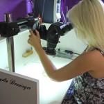 Feineinstellung Mikroskop