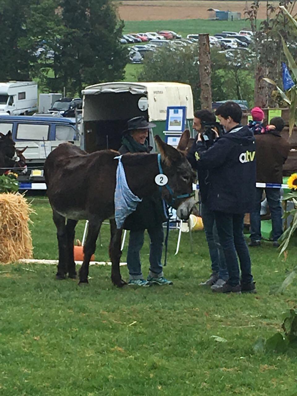 Eselreiten Bauern- u. Handwerkermarkt 2017
